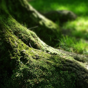 Powerbanners - sidebar sample NATURE GREEN FOREST